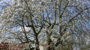 フランス語の花と花言葉一覧!どこよりも探しやすい決定版を作ったよ